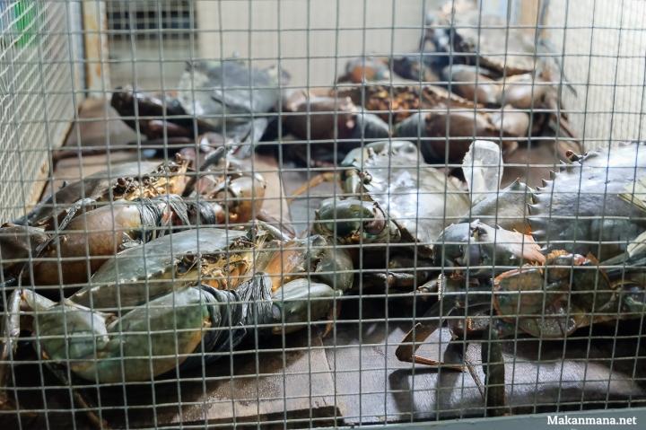 kepiting-jantan-dan-betina