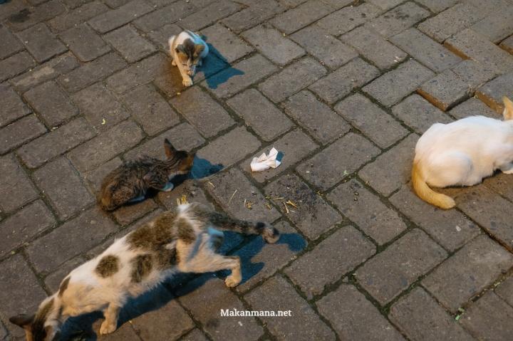 Kucing Kelaparan